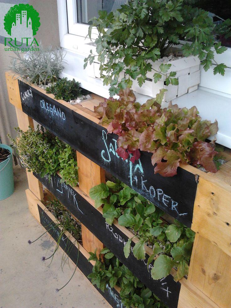 Pionowy ogródek warzywny z wykorzystaniem palety (vertical veg garden with pallets).