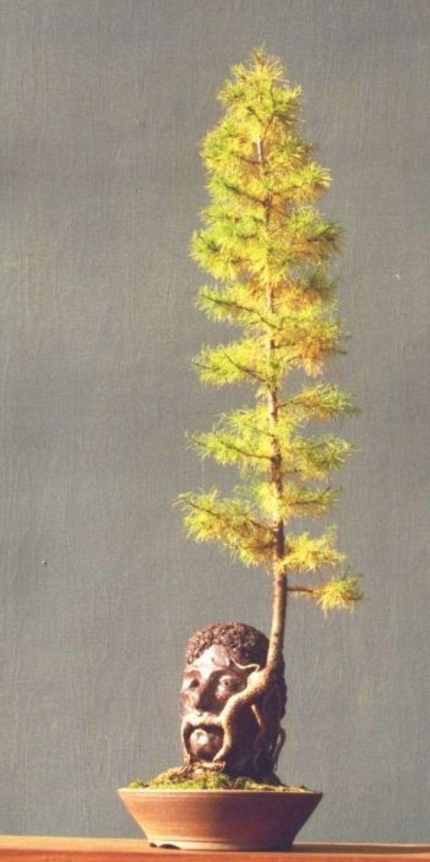 best house plants images on pinterest apartment plants ceramic