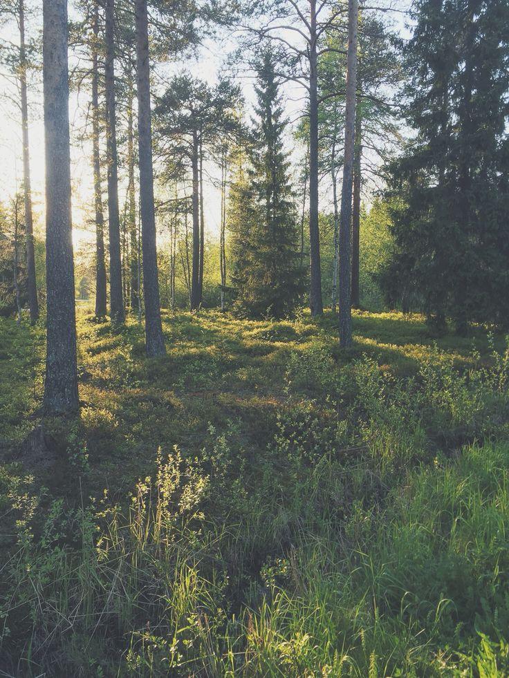 Skog i Umeå