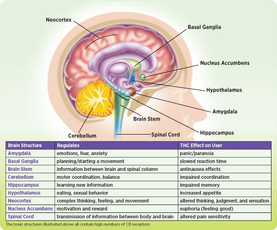The Science of the Endocannabinoid System: How THC Affects the Brain and the Body. Refer to Figure 2 to see areas of the brain with cannabinoid receptors, then locate those areas on the chart to study some of the different effects of THC on the user.