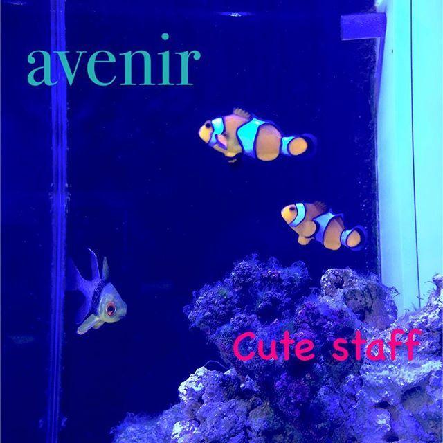 【avenir.himeji】さんのInstagramをピンしています。 《久々うちの可愛いスタッフ達☆  毎日元気にお客さんと僕を癒してくれます♪  サンゴも入れたらもっといい感じになるかなー(*^^*) http://www.avenir–himeji.com  #avenir #アヴニール #姫路 #美容院 #美容室 #ヘアサロン #アクアリウム #カクレクマノミ #海水魚 #ニモ #ファインディングニモ #organic #treatment #hair #hairsalon #オシャレ #メンズ #レディース #フォロー #フォローミー #followme #follow》