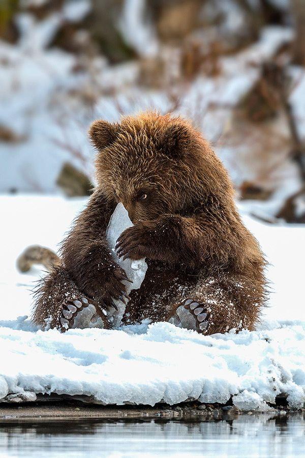 Ice toy por Sergey Ivanov Península de Kamchatka, Rusia