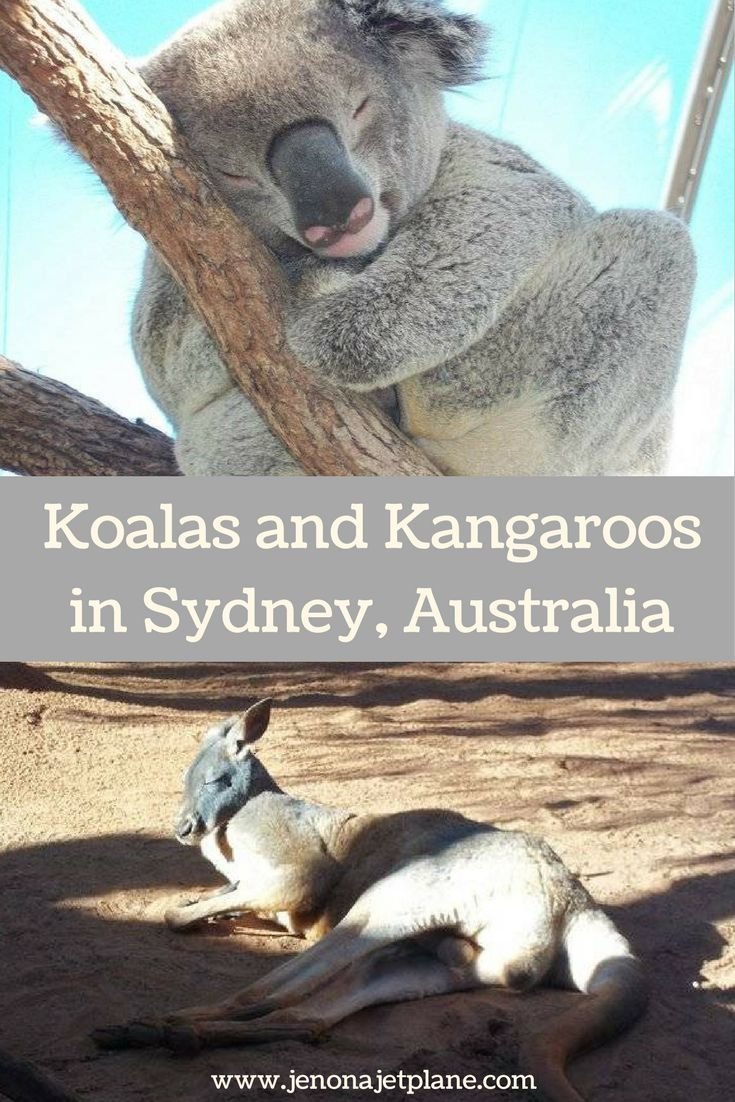 At Wild Life Sydney Zoo guests have the ability to meet a koala and a kangaroo. The last place you'd expect to have a wildlife adventure is in the middle of Sydney, Australia!