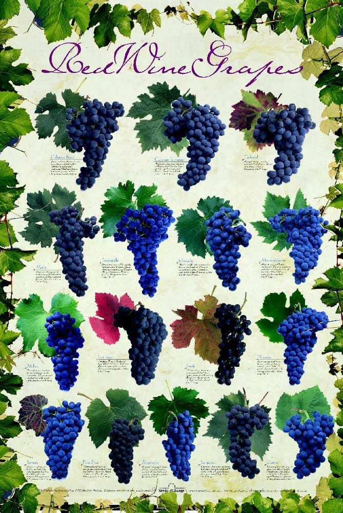 Wine Facts - Red Wine Grapes