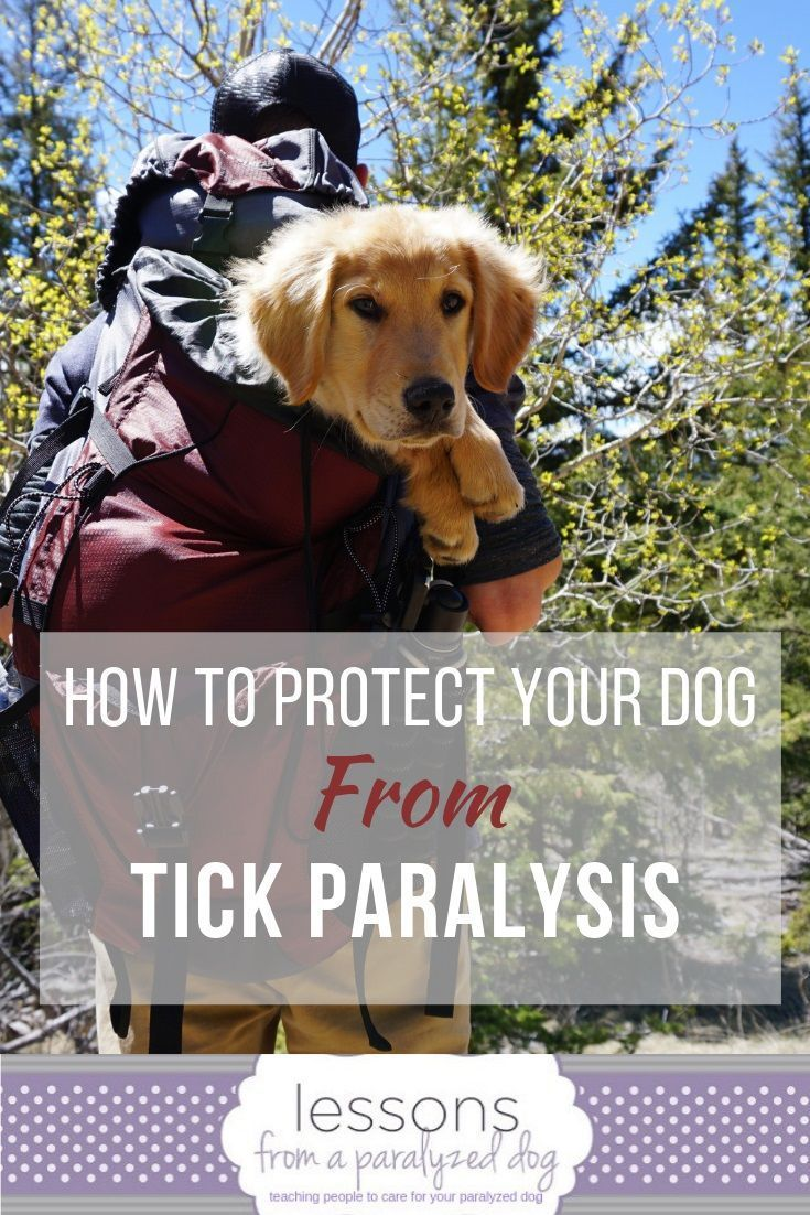 Facts Pet Parents Should Know About Tick Paralysis Pet Parent