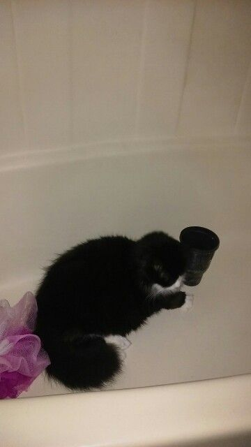 She is in the bathtub I think she wants to have a shower  I miss my little kitty Tess
