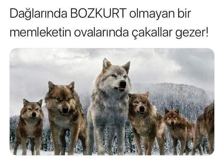 Türkiye Türklerindir Bozkurt Türklerin Simgesidir...
