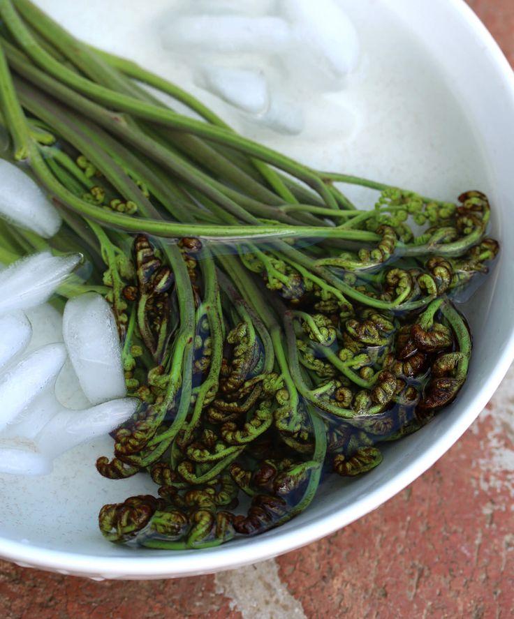 Wild Foraging: How To Identify, Harvest and Prepare Bracken Fern