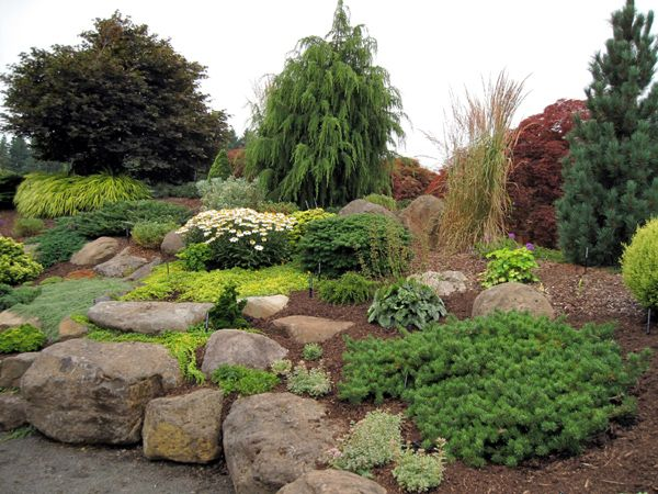 Evergreen Gardens: Gardens Ideas, Rocks Gardens, Evergreen Plants, Conif Gardens, Gardens Yard, Conif Rocks, Dreams Gardens, Evergreen Gardens, Gardens Rocks