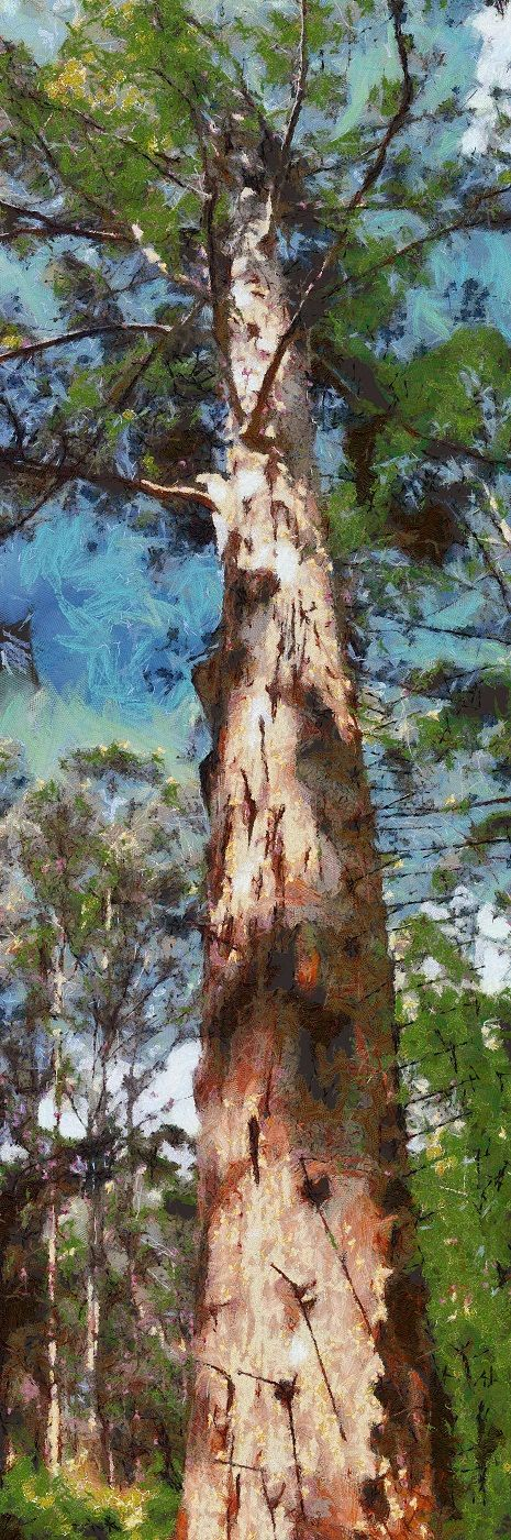 Stretched Canvas Print of Gloucester Tree  vertical by ArtbyOlafur, $120.00