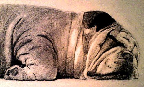 This is a charcoal drawing of my English Bulldog Buddha.