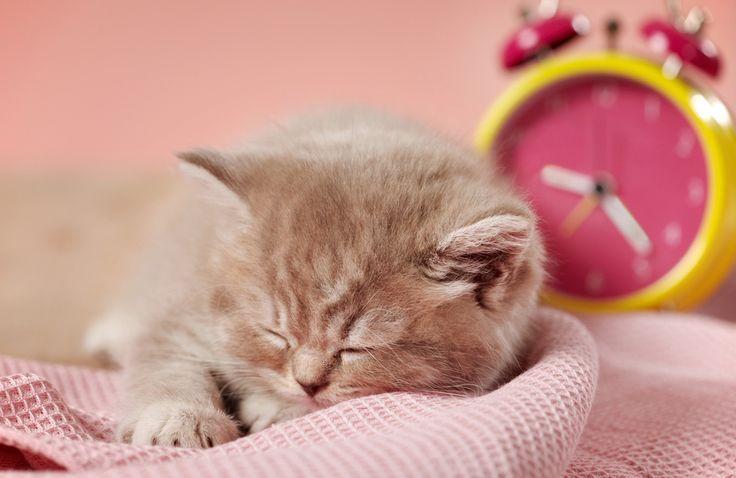 Pink=)