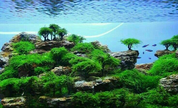 Aquascaping for Beginners | Aquarium landscape, Aquascape ...