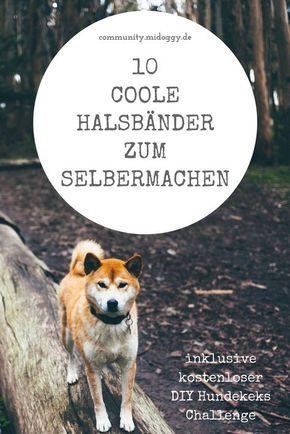 #Hunde || #DIY || Halsband || Selbermachen || Tipps || Ideen || Hund