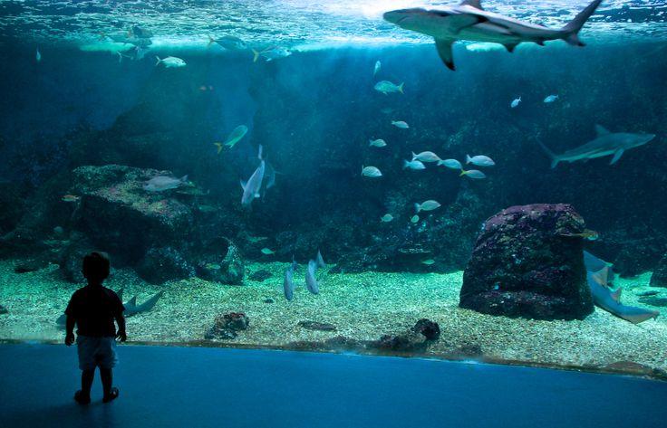 17 meilleures images 224 propos de photos de guadeloupe sur 206 les plages et jungles