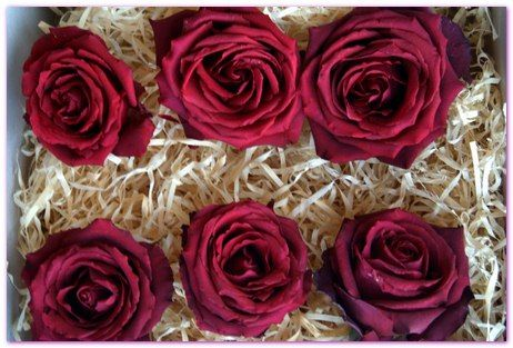 Red Rose Heads