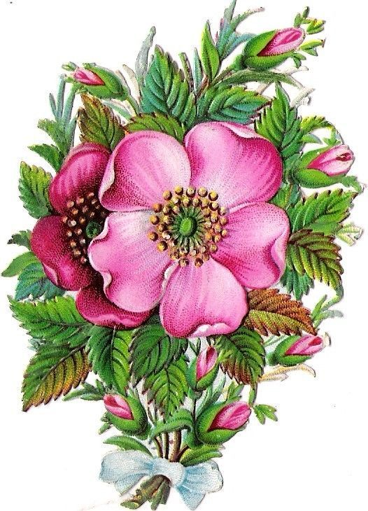 Oblaten Glanzbild scrap die cut chromo Wildrose wild rose Blume flower