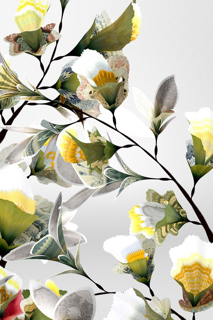 Daniel Brown   Digital Floral Art inspiration