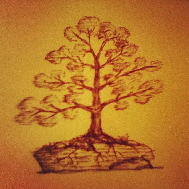 getting back to sketching  #bonsai #sketch