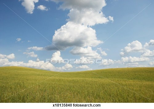 Italy, Tuscany, Val d'Orcia, cloudy sky over wheatfield