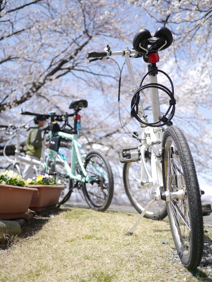 ©tomo satoさま / Mu P8 2010年 他 / DAHON仲間と桜見にポタリングした際に撮ったものです。