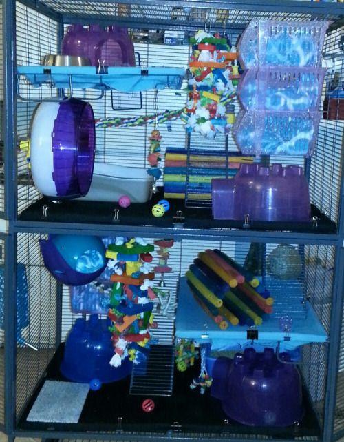 Cool rat cage setups