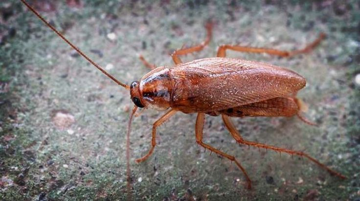 11 natural ways to rid your home of roaches for good