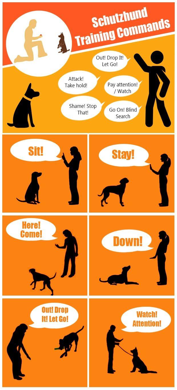 Schutzhund Training Commands Schutzhund Training Schutzhund