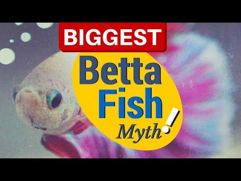 9 best betta fish care images on pinterest fish for How often do i feed my betta fish