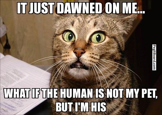 confused cat   Memes   Pinterest