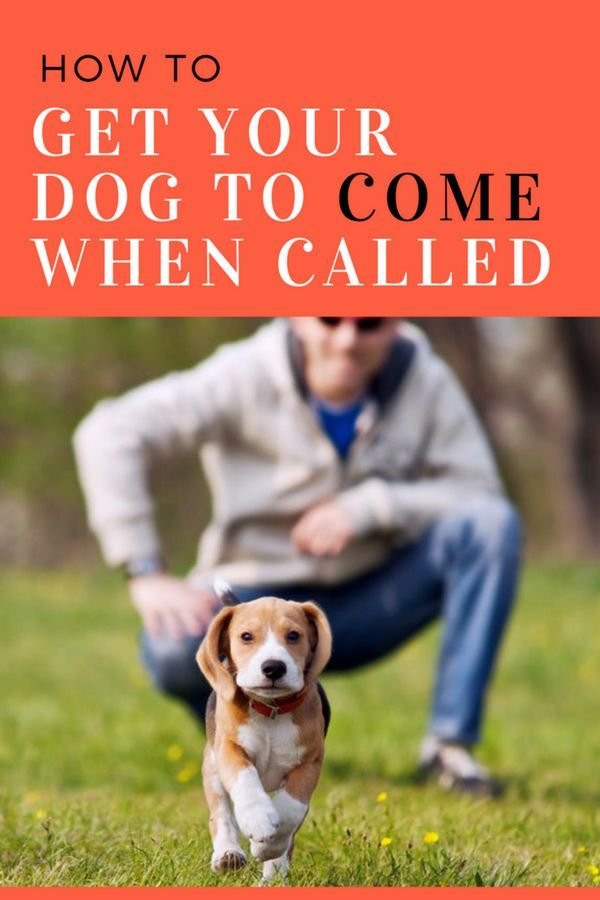How To Get Your Dog To Come When Called Training Your Dog Dog