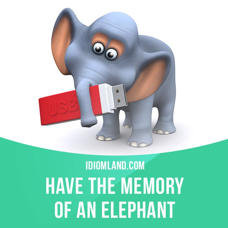 """Have the memory of an elephant"" means ""to have a very good memory"". Example: How did you remember her name? You must have the memory of an elephant."
