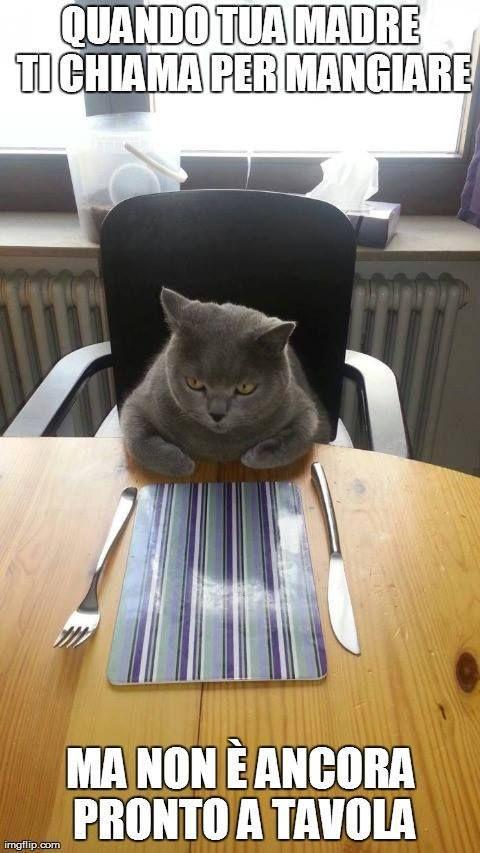 #umorismo #animali #gatti