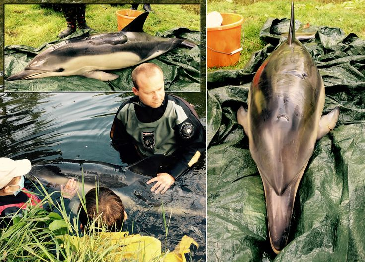 Dolphin has to be put down after suffering severe sunburn