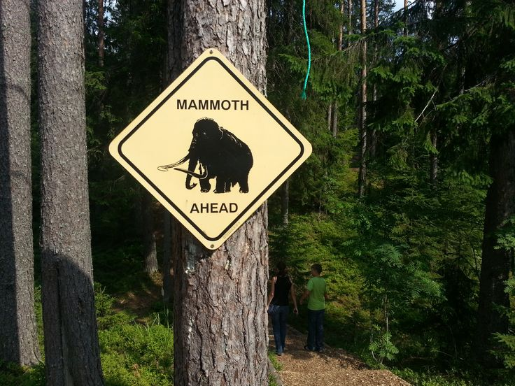 Sign in the forest. Nothern Russia.