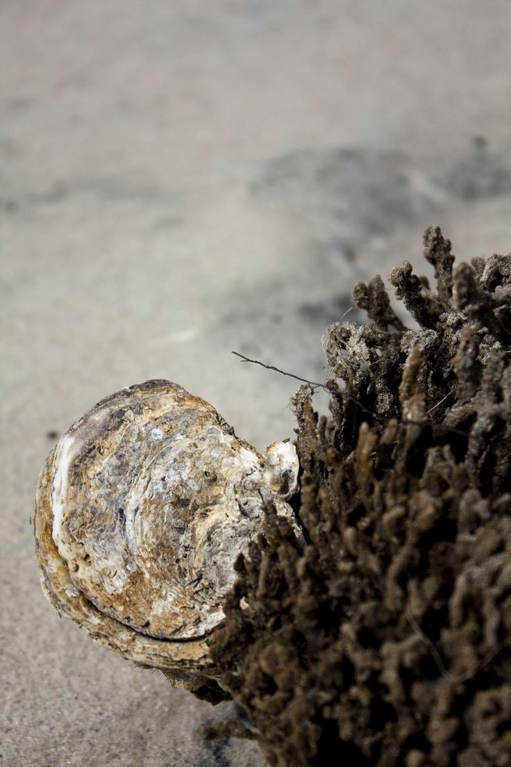 Shell & Sea Sponge: Blue Sea, Sea Sponge, Deep Blue