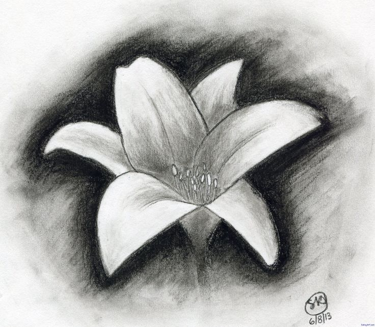 Easy Charcoal Drawings Flowers