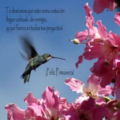 Feliz Primavera que Tengan un Hermoso dia Disfruten el Día al Aire Libre