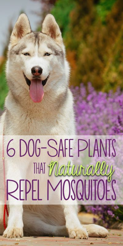 Best 25 dog friendly backyard ideas on pinterest pet for Dog safe houseplants