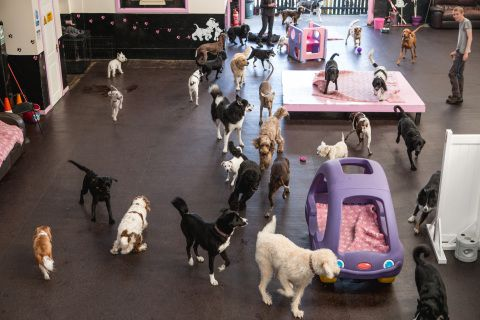 20 page fully interactive dog day care business plan. Including interactive projection/growth/costs analysis spreadsheets. Created by former investment anaylst and co-owner of successful UK dog day care centre, Safe Paws.
