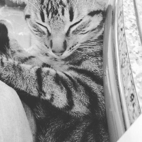 """Un gran filosofo dijo """"Dios creo los gatos, para que los humanos sintieran que es acariciar y tigre""""  GRANDES FELINOS :3   by: RYUK P. L"""