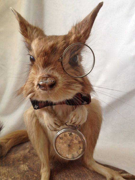 This Vintage Taxidermy Springhare May Have Been by OnceAgainLoved, $650.00