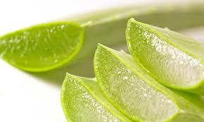 Aloe Vera Benefits - From healing yeast infections to herpes, from healing burns to digestive system issues, to superior anti-aging properties, aloe vera has got it all. Click photo to read article, and find out how to avoid the 95% of aloe products lining store shelves, which are inferior and devoid of healing benefits.