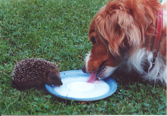 Sharing // chien dog herisson hedgehog by etrenard
