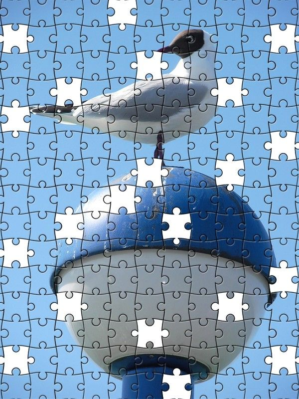 Free Jigsaw Puzzle Online - Seagull