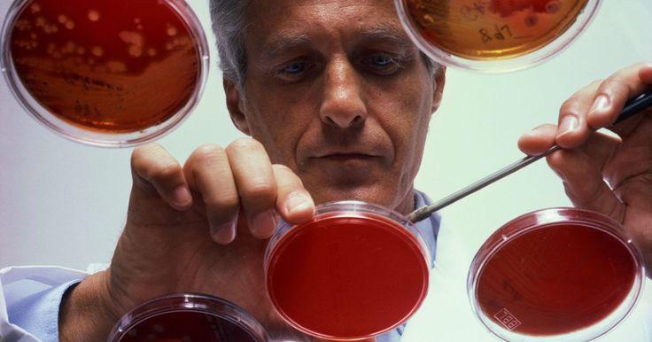 """Componentes dos tampões de lise. Lise é uma palavra grega e significa simplesmente """"dividir"""" ou """"decompor"""". É uma boa descrição da reação que ocorre com as células em um tampão de lise, uma solução que as decompõem para extrair seu conteúdo. Os cientistas usam essas soluções para extrair o DNA ou as proteínas nas análises de células, especialmente no caso das bactérias. O tipo de ..."""