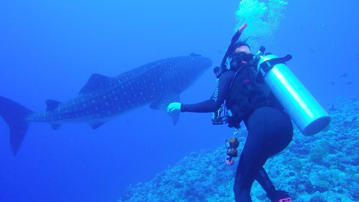 Palau Siren Scubadive, Palau received a 5 star diver review on ScubaTribe.