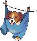 – Les Gifs et Cliparts canins - · Elevage du Royaume des Chi's