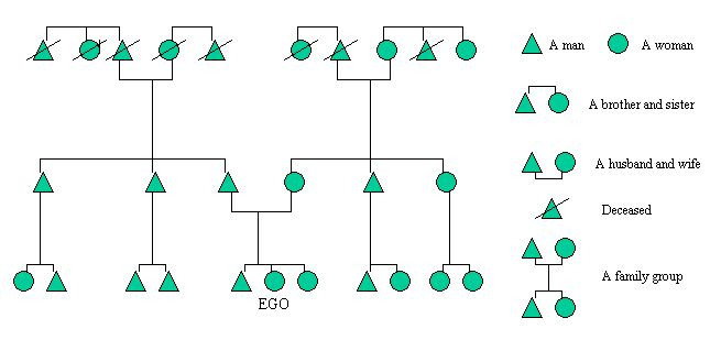 Anthropological Family Tree Diagram   Yahoo Image Search Results
