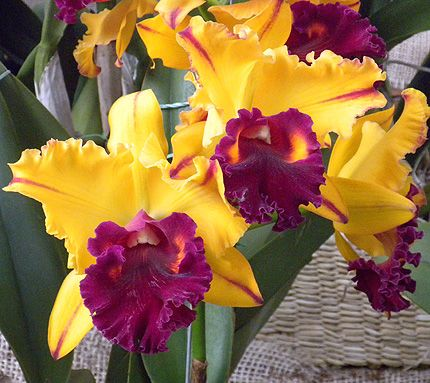 You can smell many different types of orchids in Colombia. There are over 3500 species.